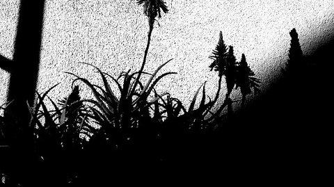 写真・アロエの花.JPG