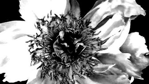 写真・白い花.jpg