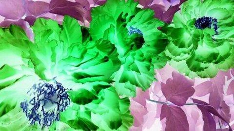 写真・緑の花.jpg