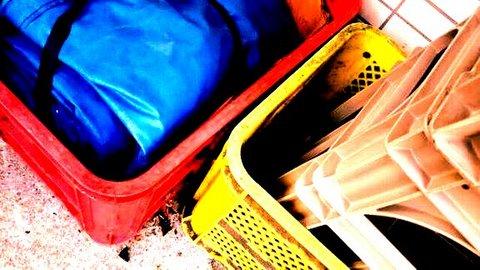 写真・赤と黄と青.jpg