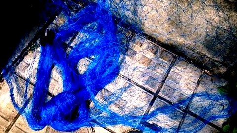 写真・青い網.jpg