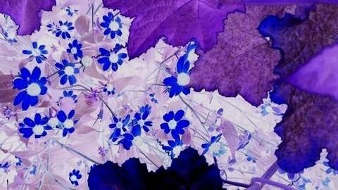 写真・青くて小さな花.JPG