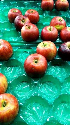 写真・売れ残りのリンゴ.JPG