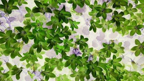 写真・緑の小さな花.JPG